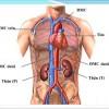 Đo tuổi thọ của các cơ quan trong cơ thể
